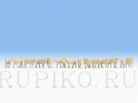 Noch 15749 Стадо овец