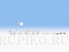 Noch 15774 Лебеди и утки