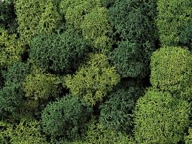 Noch 08621 Мох зеленый летний